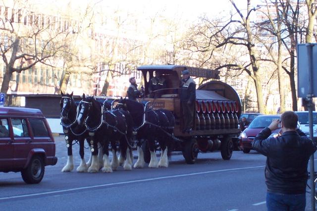 Amsterdam - Heineken Horses