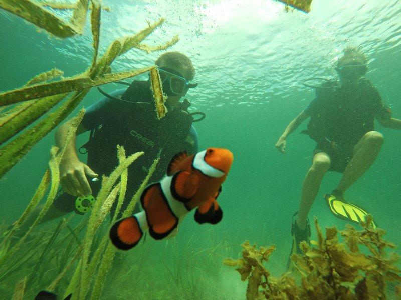 Hello Nemo