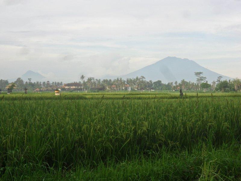 Mt Batur in the background