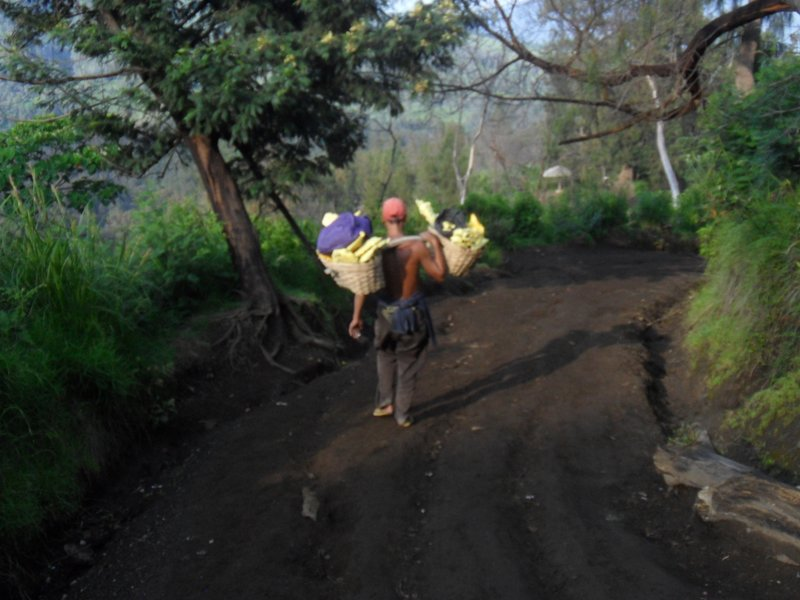 Carrying sulphur down
