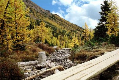 Walking bridge and Autumn Pines, Logan Pass