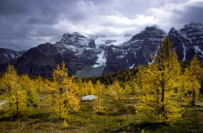 Autumn colours on Logan Pass, Canada