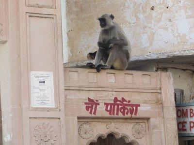 Sur les toits de Pushkar