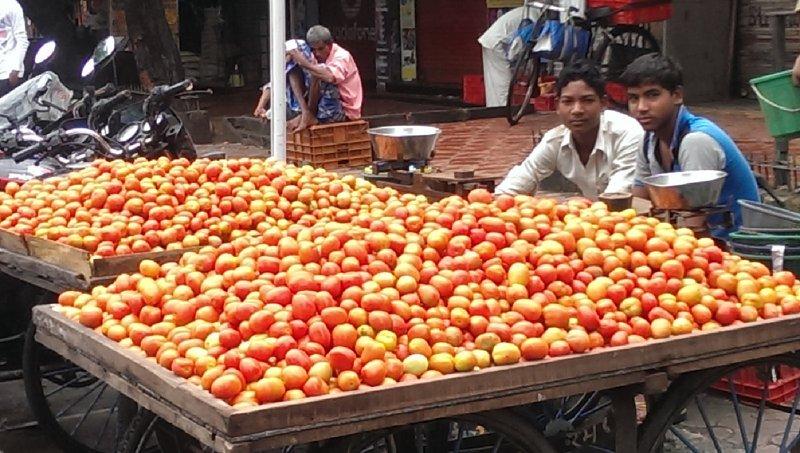 vendeurs de tomates