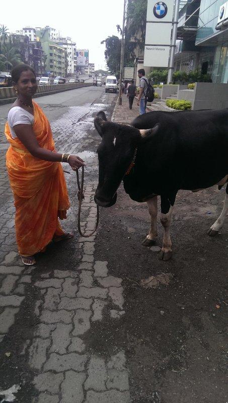 La vache sacrée