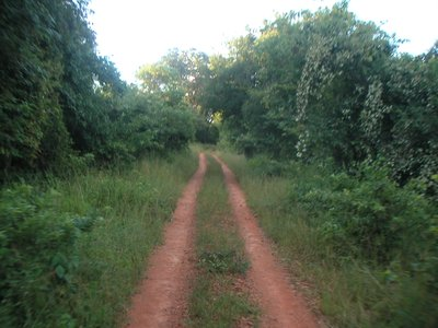 a road through the bush