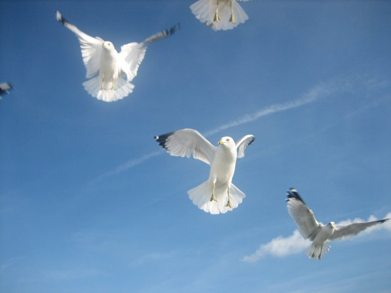 hungry seagulls