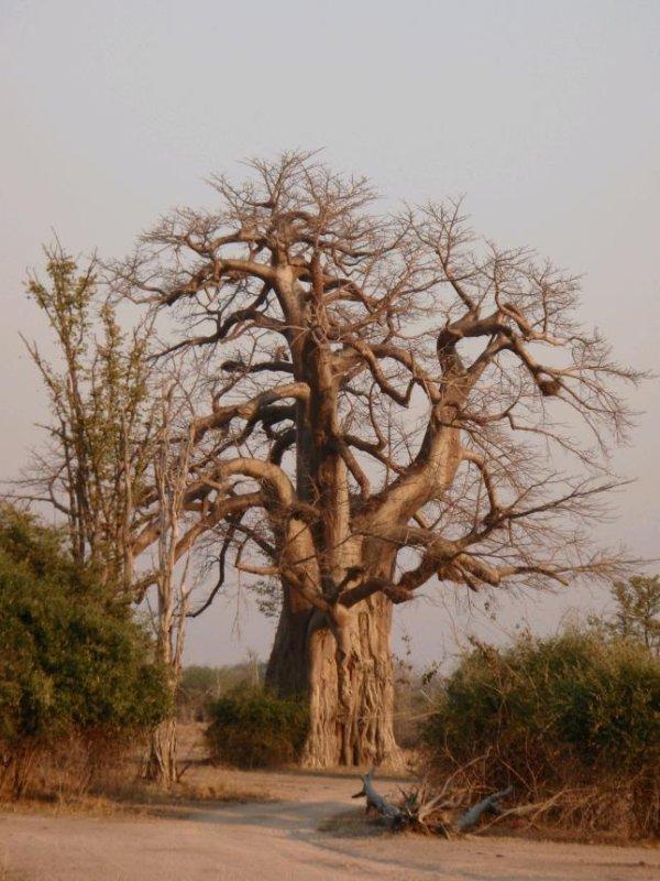South Luangwa NP 3