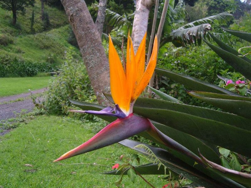 The Bird Flower...