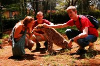 With the Cheetah