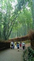 25_Tenryuj..mboo_forest.jpg