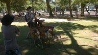 36_Feeding_the_Deer.jpg