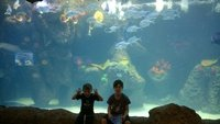 Boys_at_Aquarium.jpg