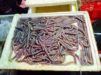 raw_sea_worms.jpg