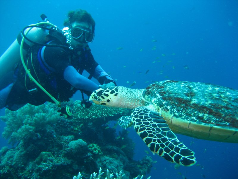 Jochem and Turtle