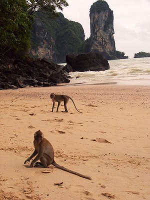 Monkeys Ao Nang Beach