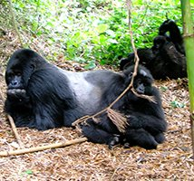 3_day_gorilla_tour_uganda