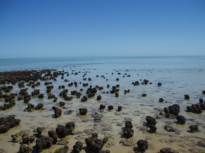 Stromatolites, oldest rocks on earth, Coral Bay, WA