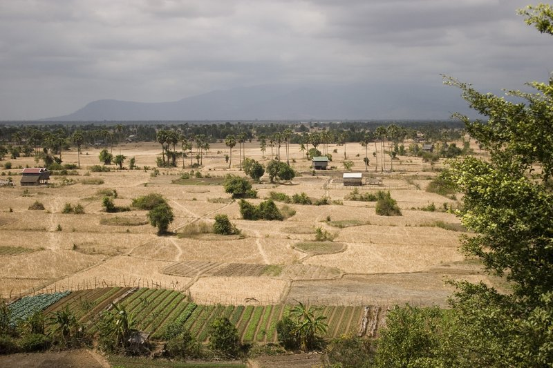 Reisfelder in Kampot