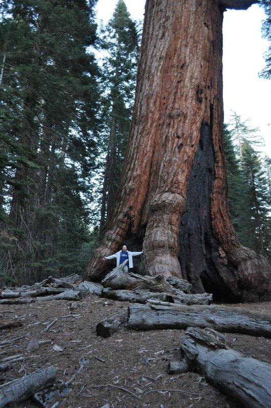 large_270_Sequoia1.jpg