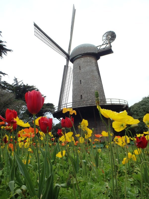 Windmills and Tulips in the park - it's not even Amsterdam