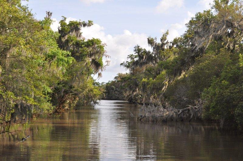 large_Swamp.jpg