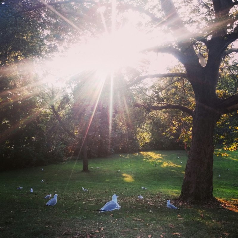 Bird Walk Park