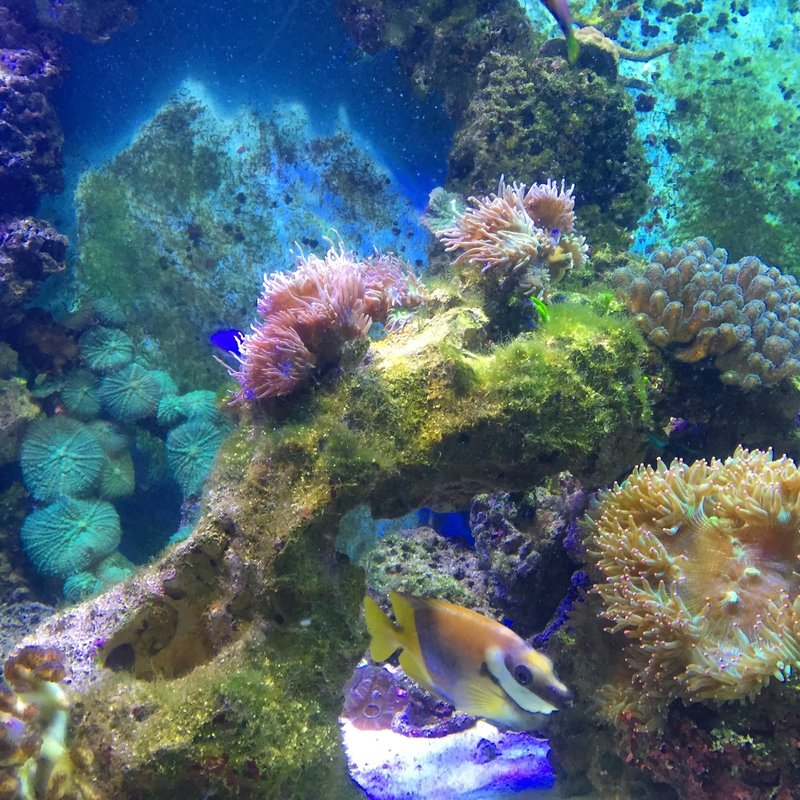 Tropical Reef in the London Aquarium
