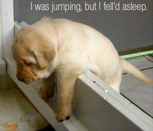 funny-puppy-300x256