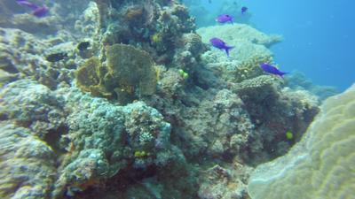 Dive in Great Barrier Reef - Ribbon Reef, Agincourt Reef