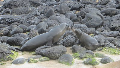 Galapagos, île San Cristobal