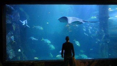 Melbourne à l'aquarium