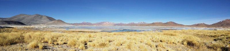 Lagunas Altiplanico, Talar, Salar de Atacama