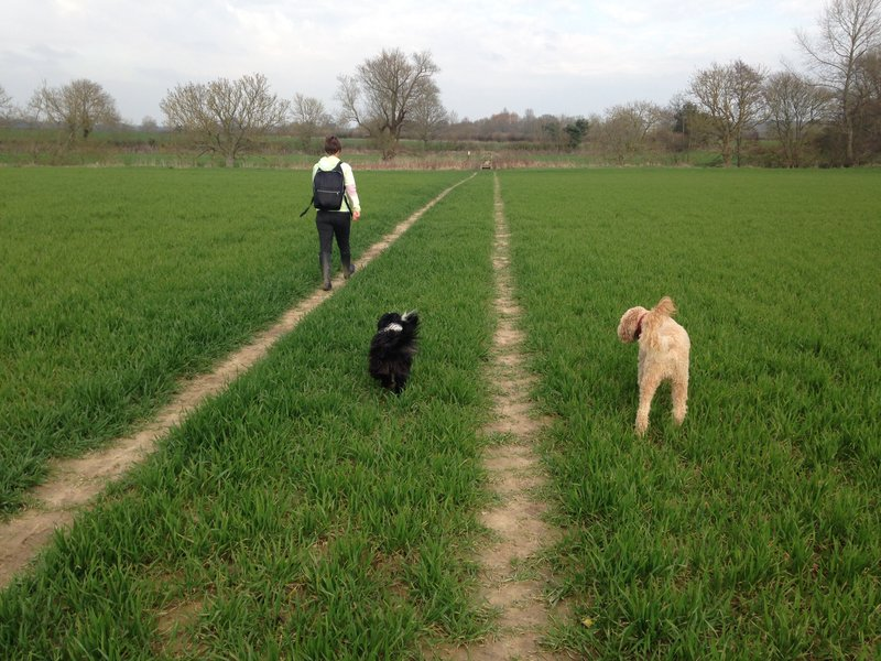 Walking the dogs at Barcombe Mills