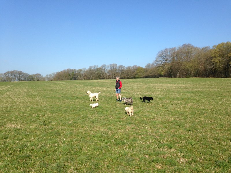 Out walking the dogs at Pound Farm