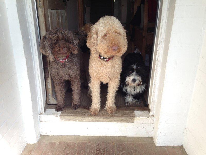 Riff Raff, Bolly and Ella lining up to say goodbye!
