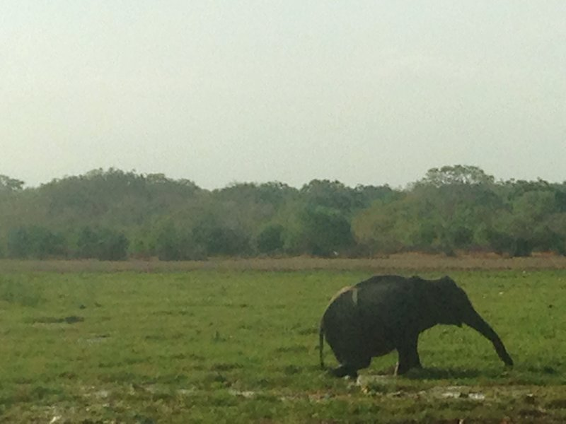 A close view of a grazing elephant