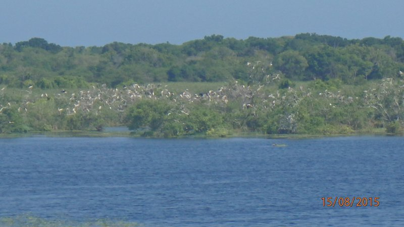 Birds nesting in the trees by a lagoon