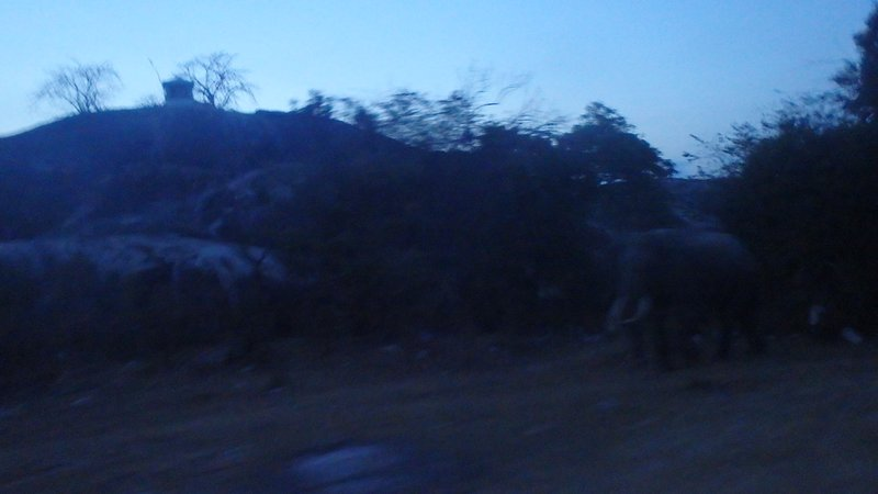 A large elephant with tusks walking slowly by in the dark