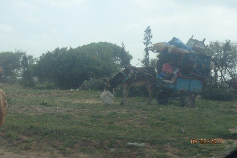 On the road to El Jadida