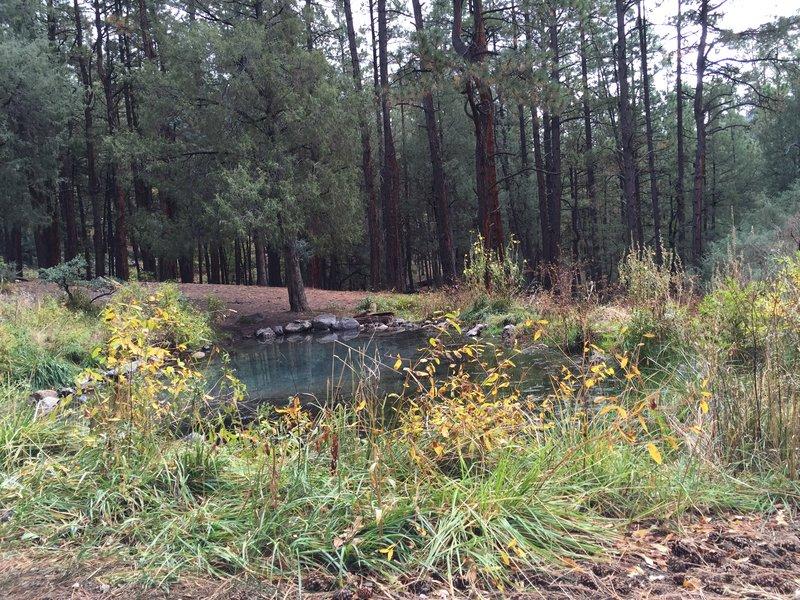 McCaulley Springs