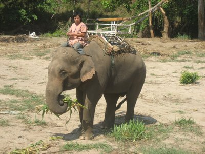 How the Thai ride an elephant!