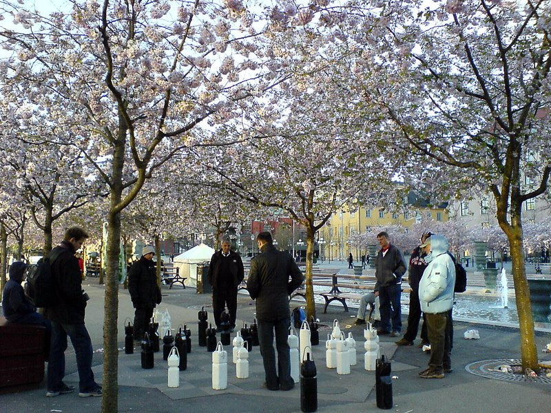 Playing chess under the cherry trees