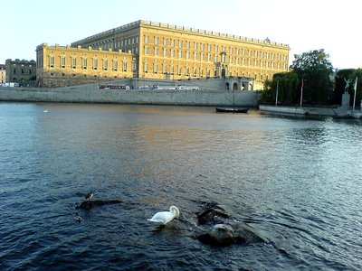 Stockholm Royal Castle with Swan