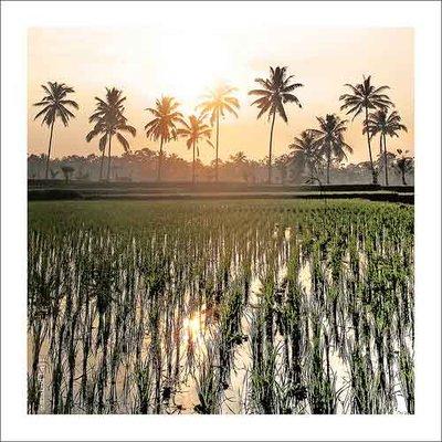 Paddy Rice field / UBUD / BALI