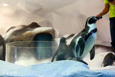 feeding_the_penguins.jpg