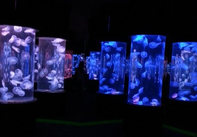 jellyfish_room.jpg
