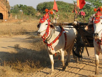 Festival Bullock Cart
