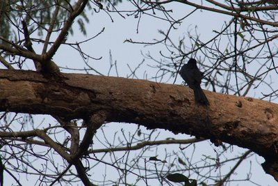 Bardia narional Park