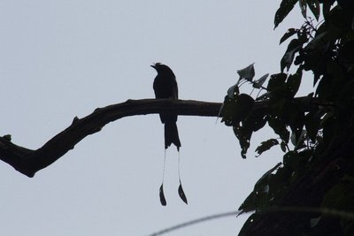 Bird inside the natonal park